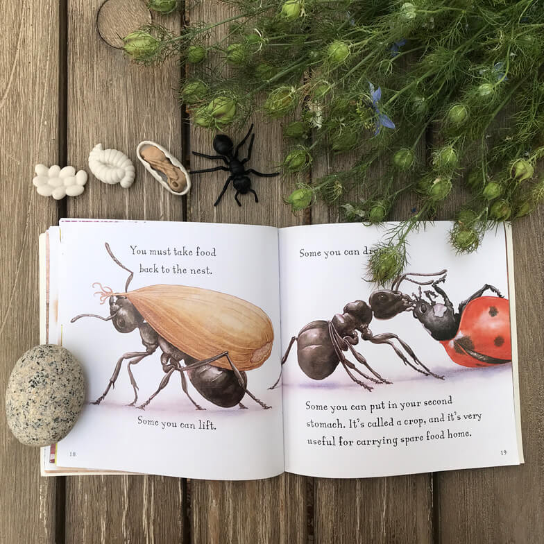 children books about ants - Are you an ant?