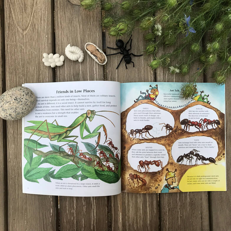 children books about ants - The Life and times of the Ant