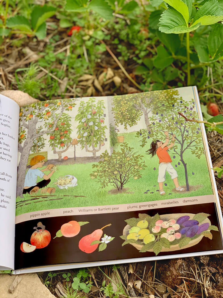 How Does My Fruit Grow? book by Gerda Muller