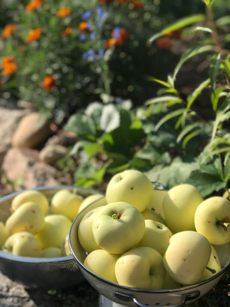 growing fruit trees in Colorado