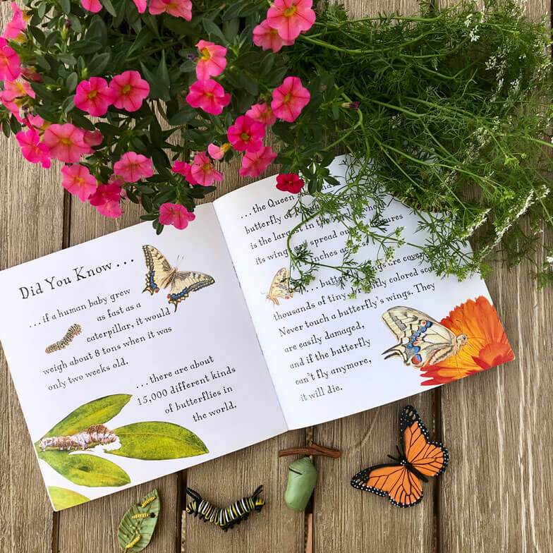 children books about butterflies insects